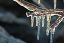ice-tree.jpg
