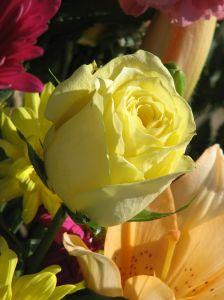 1134611_flowers_