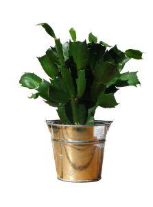 1199619_green_plant